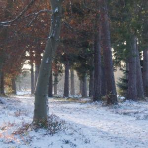 Holly Wood winter